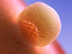 Имплантация яйцеклетки
