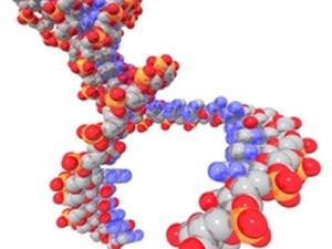 Генетическиские анализы