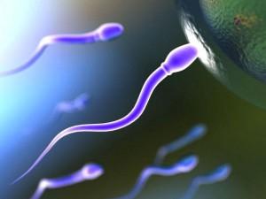 Физиология зачатия