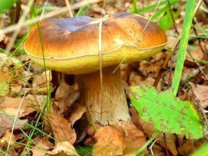 Растущий гриб
