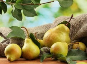 Несколько груш с дерева
